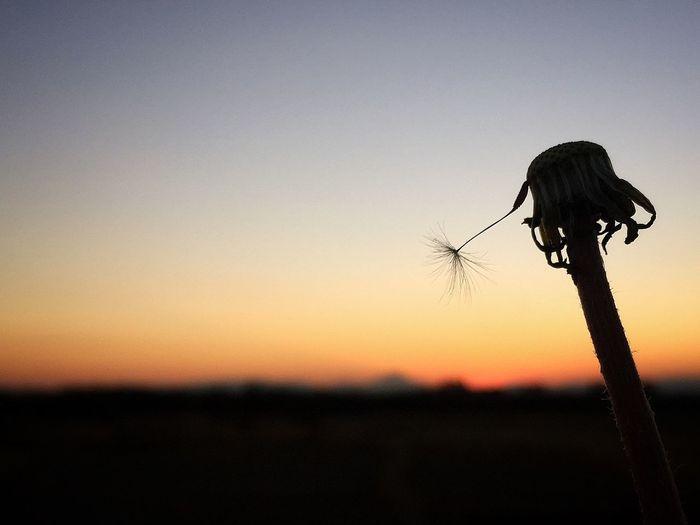 そして…生かされている意味は あの日から21年 Requiem 117 阪神淡路大震災 Praying Prayforhanshinawazi Beautiful Sunset Myfavoriteplace IPhoneography Sunset Silhouettes https://m.youtube.com/watch?v=K7rob0JVlfE