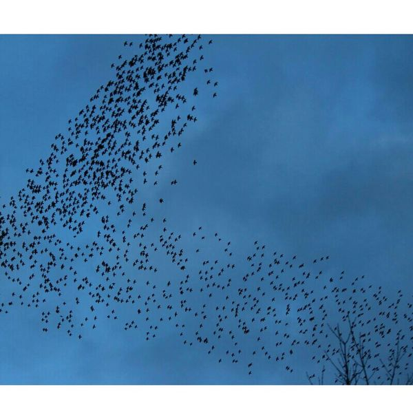 Birds Kuşlaruçuyor Objektifimden Objektifimdenyansiyanlar Yozgat Turkey Turkishfollowers Folllowme Clouds And Sky Blue