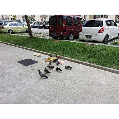 A scene of pigeons devouring prayer food!