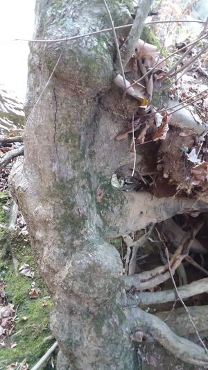 Perspectives On Nature Tree Trunk Twisted Tree Trunk