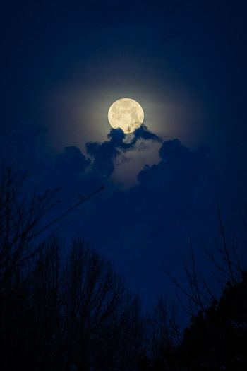 Astronomy Beauty In Nature Cloud - Sky Dusk Full Moon Low Angle View Moon Moonlight Mystery Nature Night No People Outdoors Planetary Moon Plant Scenics - Nature Silhouette Sky Space Tranquil Scene Tranquility Tree