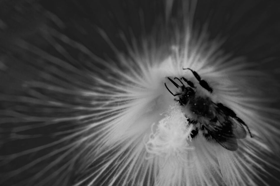 Beauty In Nature Black Background Bloom Blossom Botany Close-up Extreme Close Up Extreme Close-up Flower Flower Head Fragility Freshness Full Frame Growth In Bloom Macro Nature Petal Pollen Single Flower Softness Springtime Stamen Studio Shot Zoology