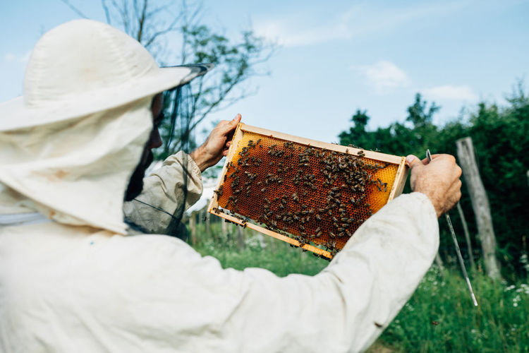 Close-up of beekeeper examining beehive