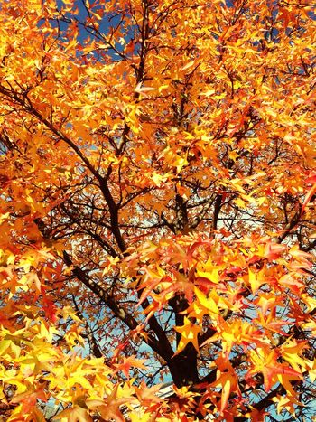 Taking Photos Autumn #fall Orange Beautiful Ilovenature