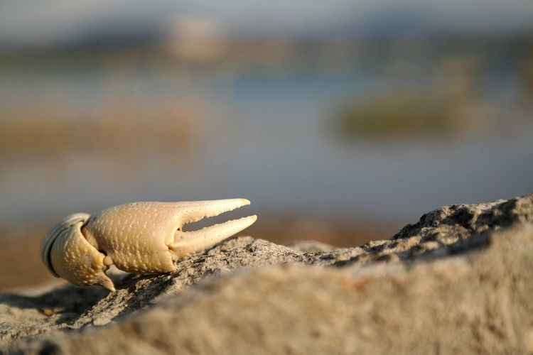 Close-up of crab claw on rock