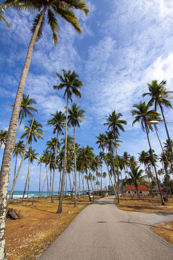 Tree Tropical Climate Plant Palm Tree Sky Direction The Way Forward Road Transportation Beauty In Nature Nature Cloud - Sky Diminishing Perspective Growth No People Land Day Tranquility Tranquil Scene Scenics - Nature Outdoors Coconut Palm Tree Treelined Tropical Tree