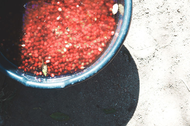 The making of coffee: soaking the fruits Atitlan Lake Bowl Cherries Close-up Coffee Coffee Beans Coffee Cherry Coffee Plantations Day Fair Trade Farm Food Food And Drink Freshness Fruit Healthy Eating High Angle View Indoors  No People Organic Red Shadow Shadow And Light