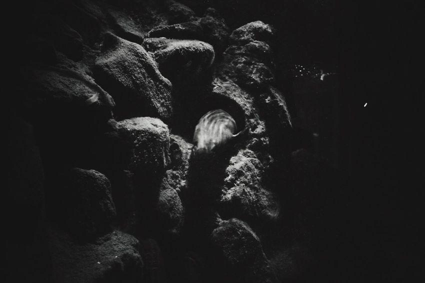 Hiding Hide And Seek Eeyemphotos Aquarium Aquatic Anglesey Sea Zoo Animal Themes Danger EeYem Best Shots Wales UK Wales❤ Wales Underwater Water Nikond3300 Nikonphotography Nikon EeyemBestPhotography Eeyemgallery Eeyem Photography Monochrome Photography