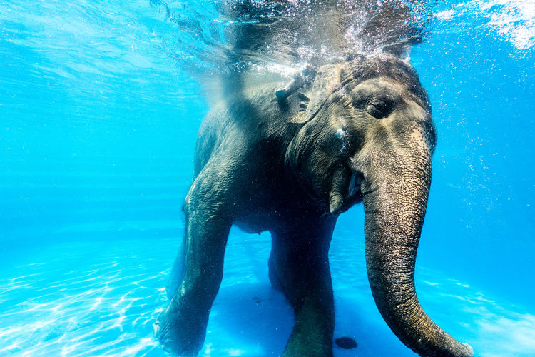 swimming elephant.. Elephant Swimming Swimming Swimming Animal Animal Wildlife Elephant Elephant Art Elephant Calf Elephant Nature Park Elephant ♥ Elephants
