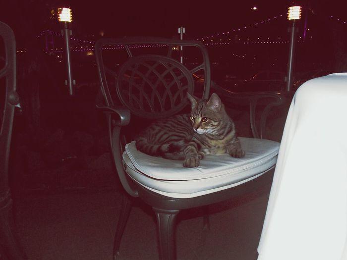 Istanbul #bogaz Cat♡ =D