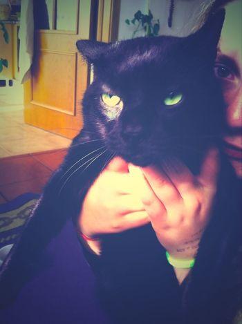 Love my little cat ❤️ Cat