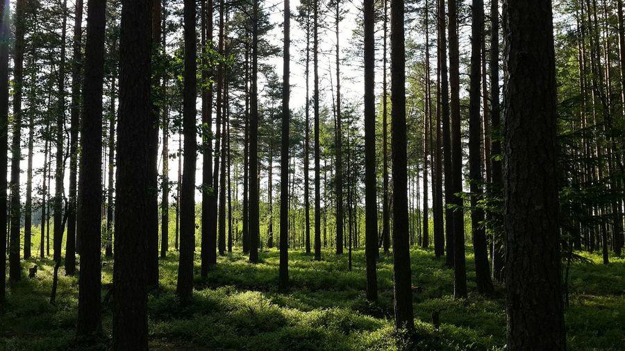 Красота вокруг нас😊🌲🌳🌱🍀🌞 Relaxing EyeEm Nature Lover Лес Russia Lovely