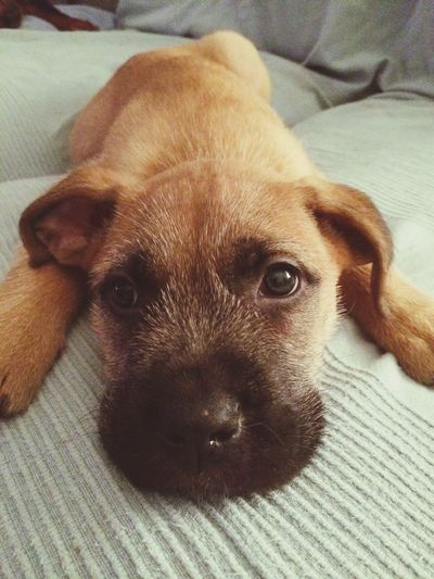 My puppy First Eyeem Photo Love Puppy Love ❤ Puppy Eyes Puppy Face