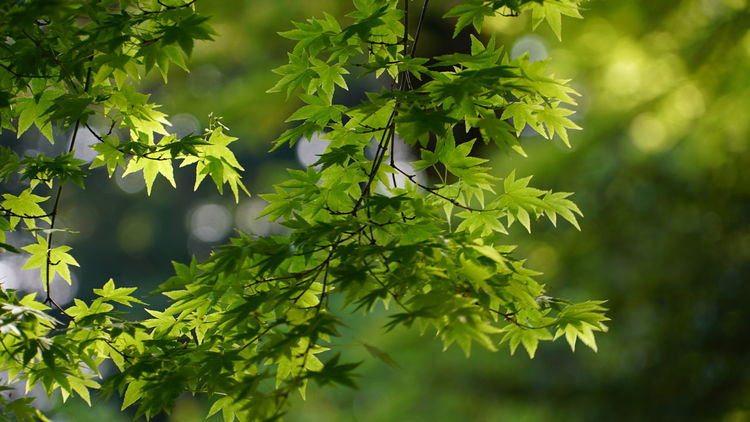 Japan Kagoshima Beauty In Nature Close-up Day Fragility Freshness Green Color Growth Leaf Nature No People Outdoors Plant Tree Leafs Leafs 🍃 活著 記憶 New Life Rest Cool
