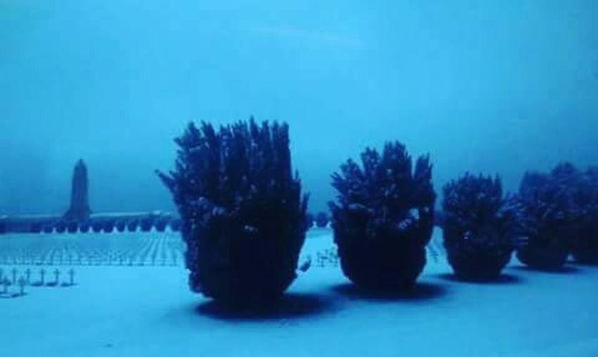 Verdun War Guerre Death Mort Cimetary Cimetiere Battle Bataille Trees Arbres Monument Soldiers Soldats Verdun 👽 Blue Bleu Snow Neige Winter Hiver