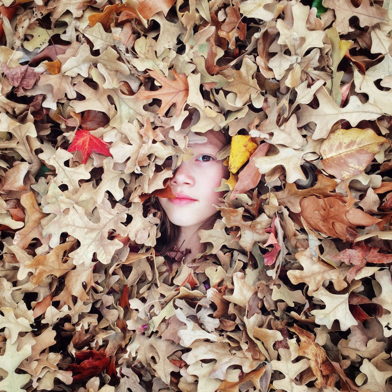Portrait Of Girl Amidst Dry Leaves