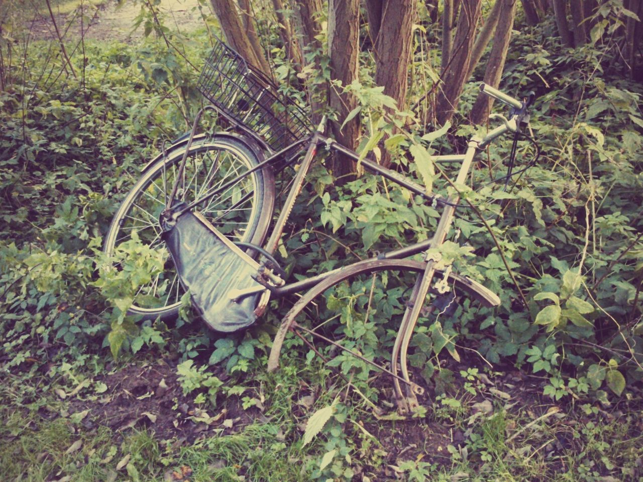 transportation, abandoned, bicycle, no people, wheel, day, outdoors, nature, close-up