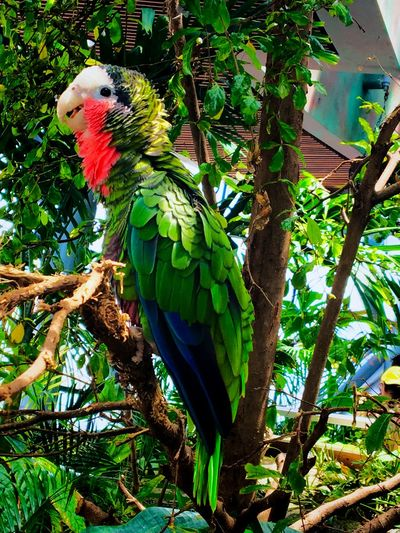 It's all Green 💚 #green #parrot #wildlife #nature #birds Parrot Animal Themes Bird Animal Vertebrate Animal Wildlife Tree Animals In The Wild Macaw Beauty In Nature Green Color Outdoors No People Nature Day First Eyeem Photo