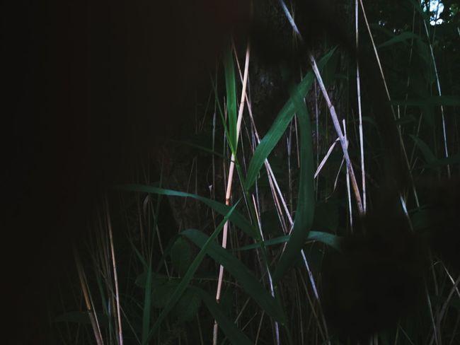 Water Black Background Tree Swamp Marsh Grass
