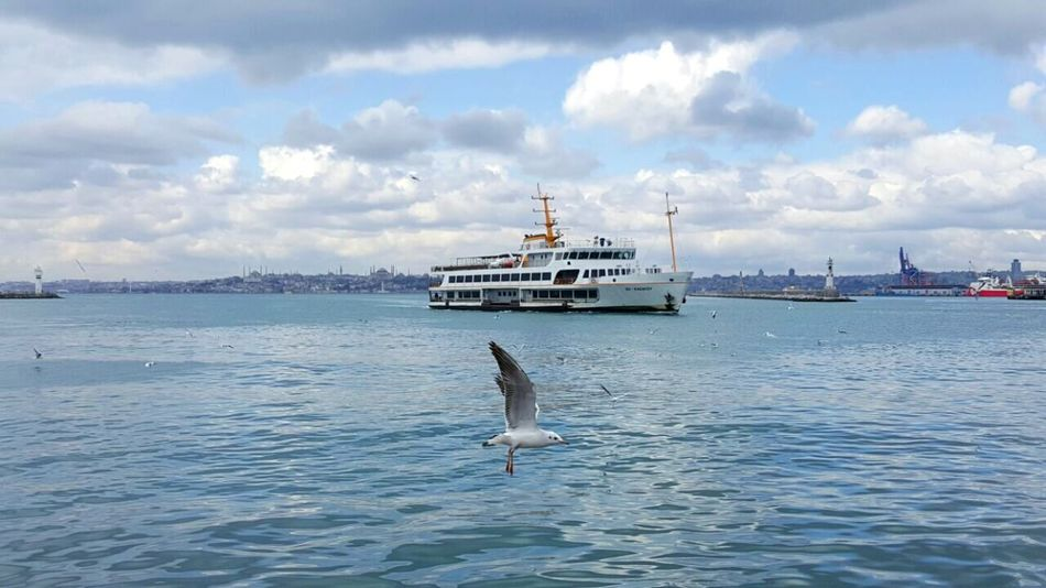 Noedit Beauty Of Nature Beauty In Nature Outdoors Nature See And Sky Bosphorus Nofilternoedit Seagull Animal Landscapes With WhiteWall No People The Great Outdoors With Adobe The Great Outdoors - 2016 EyeEm Awards