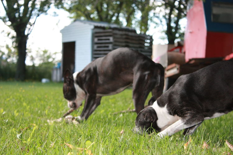 EyeEm Selects Competition Pets Championship Sport Friendship Dog Puppy Leg Collar Façade Teenage Couple Boston Terrier Purebred Dog Border Collie Paw Cavalier King Charles Spaniel Beagle French Bulldog