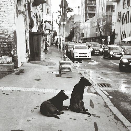 Dog ! Dogs Dogstagram Dog Love Dog❤ Monochrome Monochrome_Monday Blackandwhite Black And White Black & White
