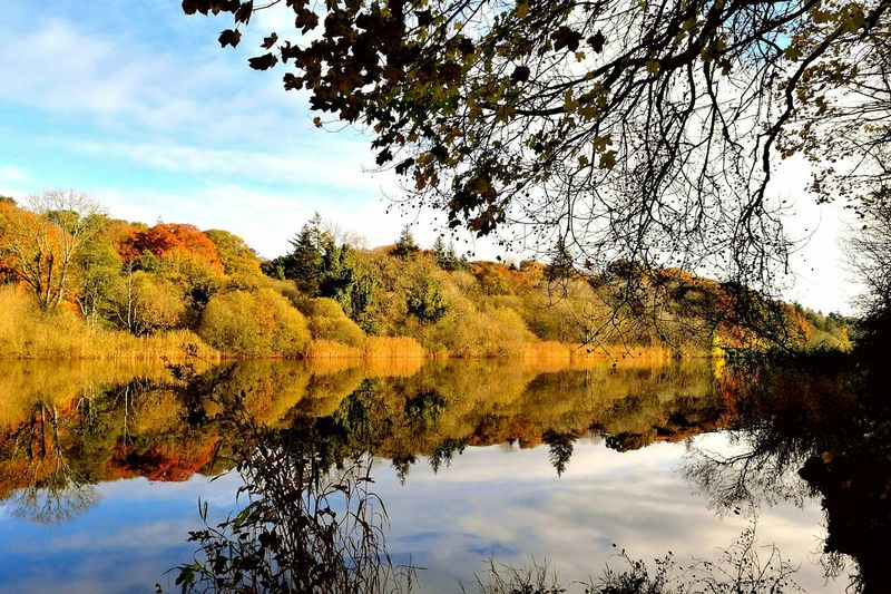 Reflection Tree Water Nature Sky Lake Beauty In Nature Scenics No People Growth Tranquility Sunset Outdoors Day Reflection Lake Branch River River View Riverside Autumn Colors Autumn Autumn 2016 EyeEm Nature Lover Eye4photography  EyeEm The Great Outdoors - 2017 EyeEm Awards