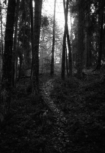 Tree Forest Tree Trunk Nature No People Outdoors Sky Monochrome Photography Monochrome Blackandwhitephotography Blackandwhite Stark Fine Art Photography November Marraskuu Rural Scene Beauty In Nature Scenics Nature Tranquility Metsä Forest Photography Forestwalk Forest Trees Forest Path