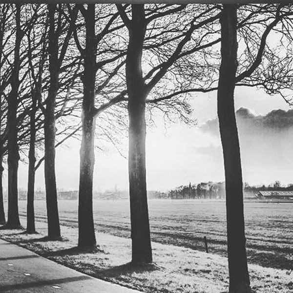 Photography Blackandwhite Beauty Beautyofnature Natureart Tree Roadtonowhere Instagram Instamoment Pic Justbe