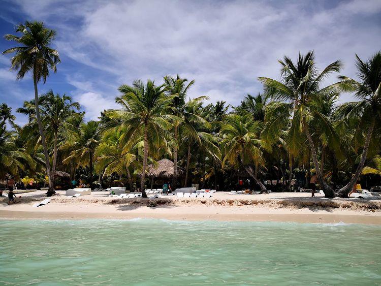Coconut tree Tree Water Palm Tree Sea Beach Sand Sky Landscape Cloud - Sky