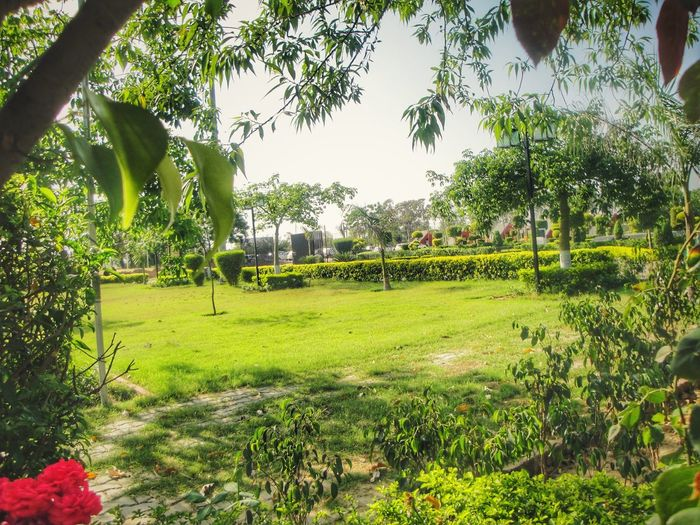 Sunnyday☀️ Lovely Professional University Grass Tree Outdoors Park - Man Made Space Punjab College Campus Sunlight