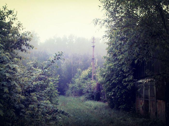 Утро туманное: