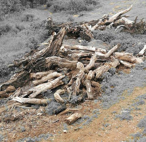 Rotting Wood Lumber