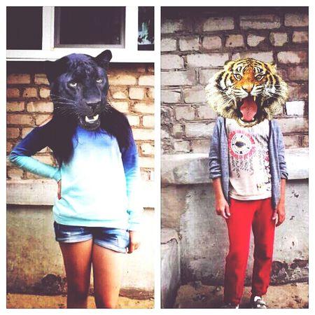 Animalface