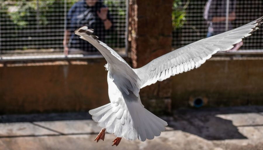 Seagull flying above a bird