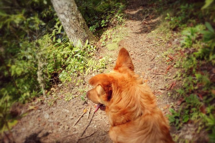 Balsam Lake Hiking With My Dog Dog Goes First Wooded Path Serene Remote Wooded Landscape wonderland Late Summer Keeno And Me Non Urban Scene Nature Beauty In Nature No People Adventure Time Outdoors