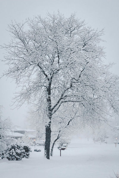 Bare Tree Beauty In Nature Cold Cold Temperature Covering Day Growth Landscape Nature No People Non-urban Scene Outdoors Scenics Season  Snow Snow Covered Snowcapped Tranquil Scene Tranquility Tree Weather White White Color Winter
