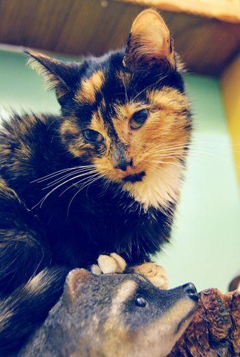 Domestic Cat Pets One Animal Domestic Animals Feline Mammal Animal Themes No People