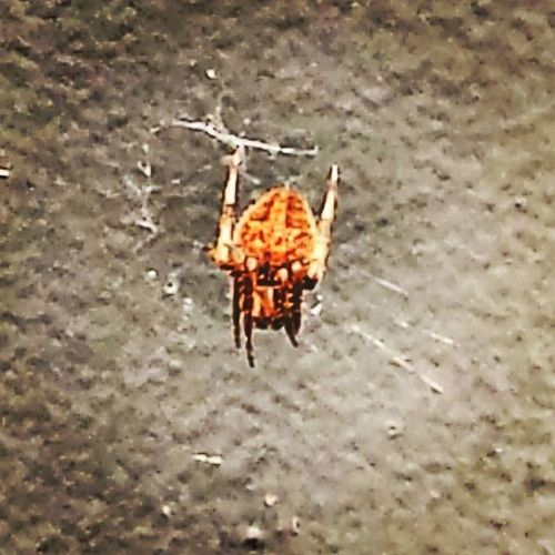 I'm eyeballing you, you little wanker. You cross the DMZ and all bets are off! Spider Gruesome Nope Nightmare