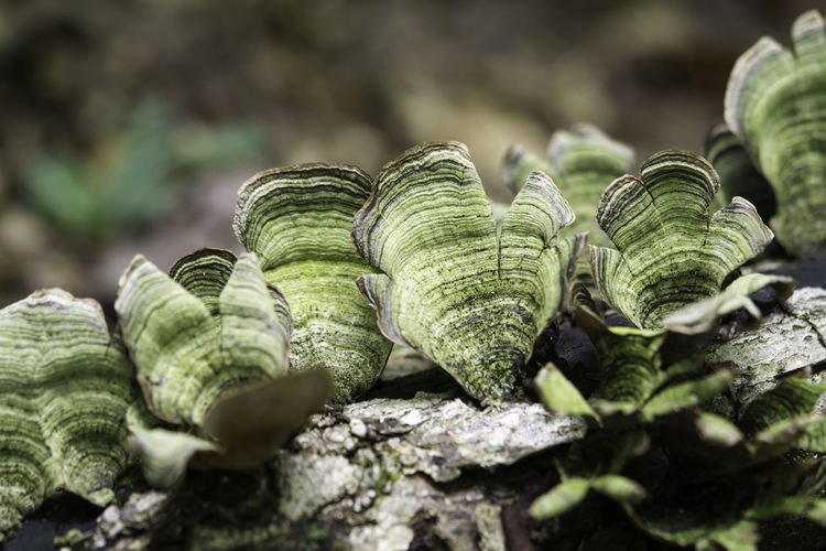 Fungus Fungi Nature Nature Photography Macro Macro Nature Beauty In Nature Selective Focus Close-up