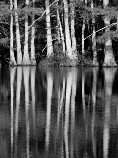 Reflection Tree Nature Water River Tranquil Scene Lake Tranquility No People Outdoors Beauty In Nature Scenics Day Blackandwhite Black And White Bllack And White Photography