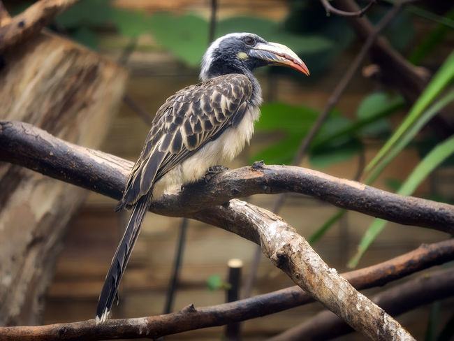 Animal Animal Themes Animal Wildlife Animals In The Wild Bird Branch Close-up Day Focus On Foreground Full Length Looking Nature No People One Animal Outdoors Perching Plant Tree Vertebrate Zoology
