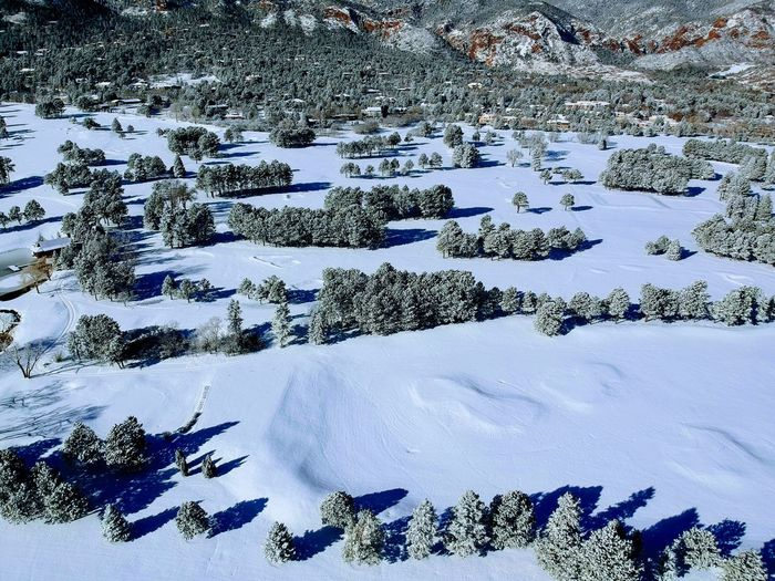 Hidden Golf Balls Snow Winter Cold Temperature Pine Tree Pinaceae Nature No People Outdoors Beauty In Nature Tree Forest Landscape Day Sky