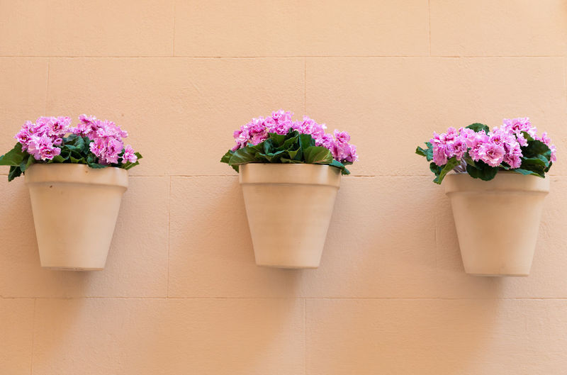 Flowers in pot against wall