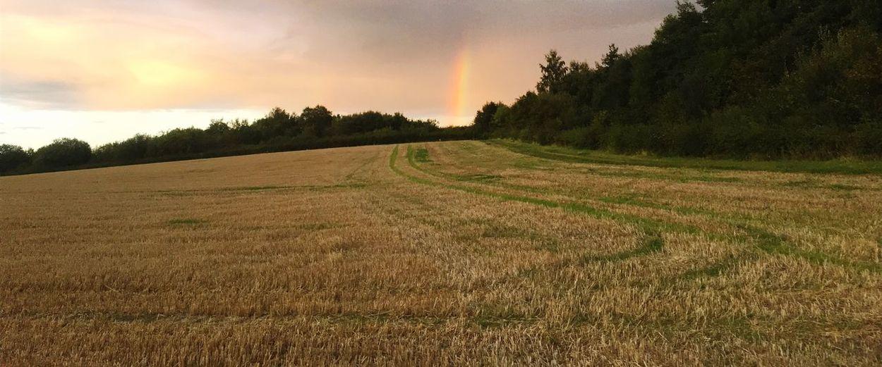 Rainbow field EyeEmNewHere Pretty Landscape Nature Trees Yellow View Field Rainbow EyeEmNewHere