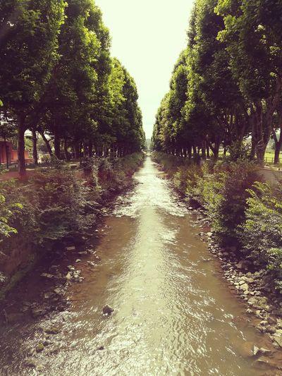 River Avenue 1 River Avenue Tree Tree Water Sky Treelined