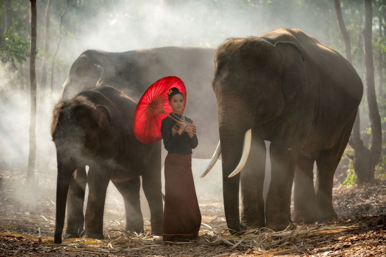 Thailand Elephant and woman wearing silk clothing culture portrait concept Animal Themes Animal Mammal Group Of Animals Vertebrate Animal Wildlife Elephant Domestic Animals Day Two Animals Nature Land Pets Domestic Standing Animals In The Wild Outdoors Full Length Livestock Dust Animal Trunk Herbivorous Thailand Laos Portrait Woman Females person Silk Clothing Astronomy Cultures Lifestyles Adult Elephants Travel Destinations Tourism
