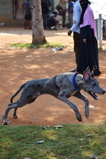 Dog Animal Themes Animals In The Wild Animal Photography Pets Dog Grass Purebred Dog EyeEmNewHere