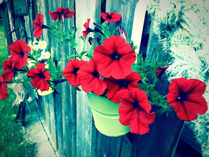 Plant Beauty In Nature Outdoors Flower Head Growth No People Nature Red Freshness Flower First Eyeem Photo