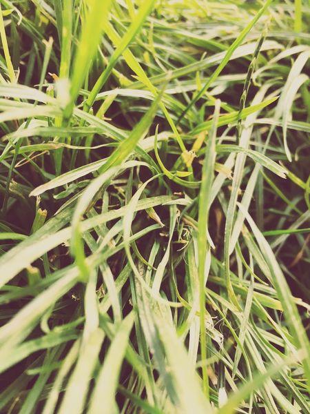 Nature Denizli Grass Photography First Eyeem Photo